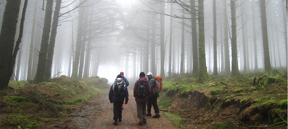 Photo : walkers in foggy forest on Exmoor